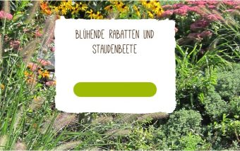 Native Plants Startseite Titelbild